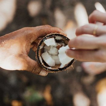 [A tan hand holds a coconut. Inside it are small pieces of coconut. One is being picked by a white hand with a gold band on the ring finger.]