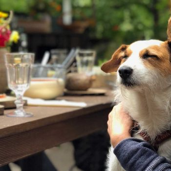 [A wire hair dog has its eyes closed while sitting on a person's lap. In the background, food, drinks, and flowers is spread out on a wooden table.]
