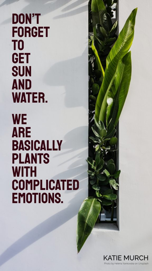 Quote is on a white background and framed with a box garden of succulents on the right. Katie Murch and photo credit is on the bottom right of the image.