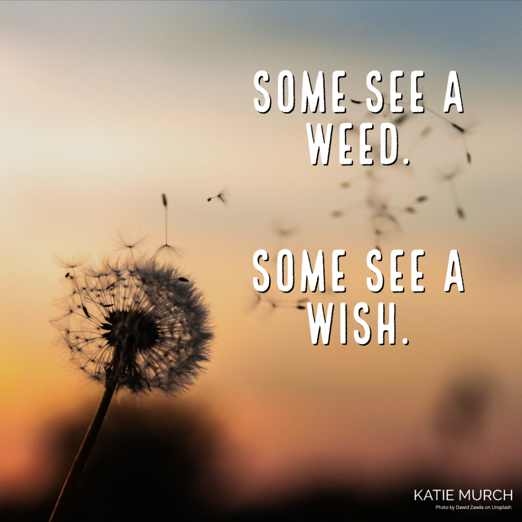 Quote is in front of a blurred yellow and orange background. Clearly on the left, a dandelion releases its seed to the wind. Katie Murch and photo credit is on the bottom right of the image.